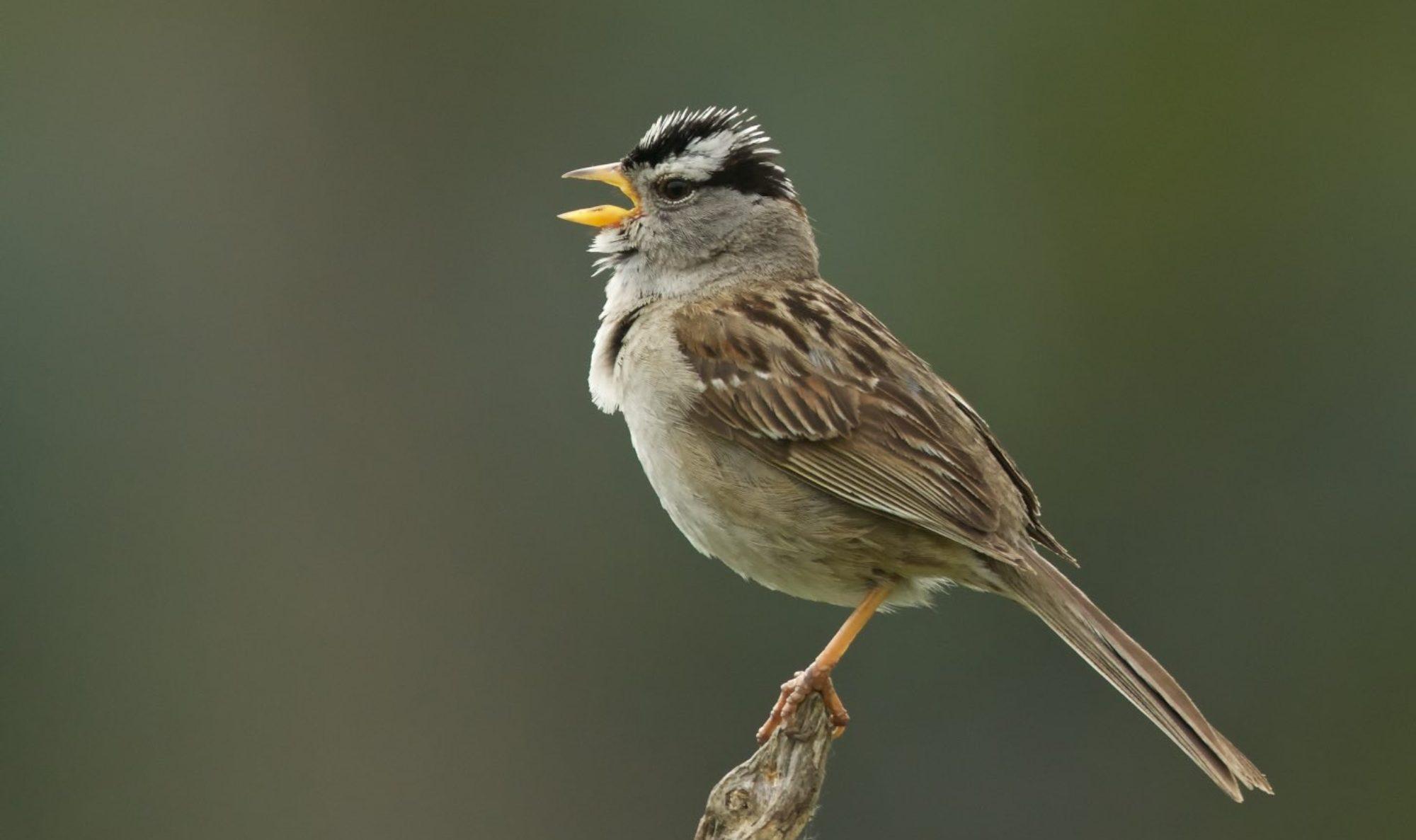 Birding Trail Apps